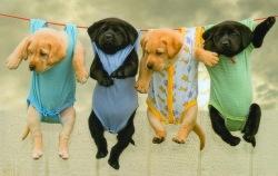 puppies-hangin